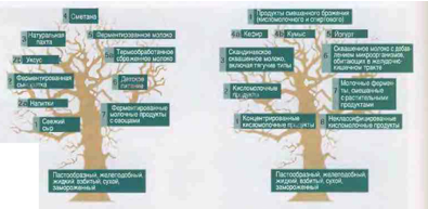 Рис. 1 Классификация кисломолочных продуктов подобна ветвям генеалогического древа