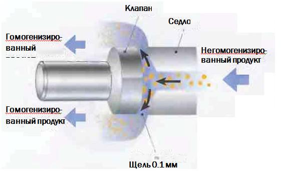 Рис.2. В процессе  гомогенизации молоко проталкивается через узкую щель, в которой происходит разрушение жировых шариков.