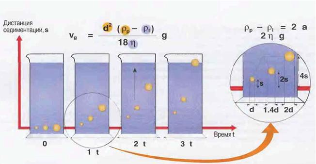 Рис.6 Скорости всплытия жировых шариков различных диаметров.